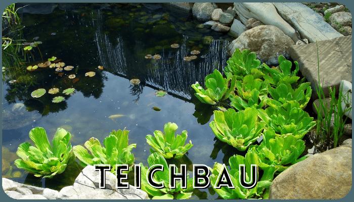 Teichbau in Dortmund